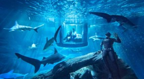 #DOPE: Spend the Night in an Underwater Room Surrounded by Sharks (Photos/Details)